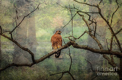 Photograph - Red Shoulder Hawk  by Peggy Franz