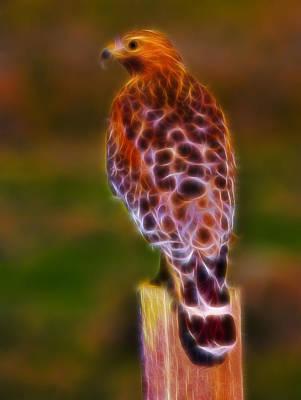 Photograph - Red Shouldered Hawk Fractal by Beth Sargent