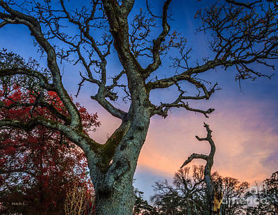 Clearlake Photograph - Red Sky At Morn by Mitch Shindelbower