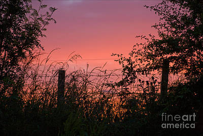 Photograph - Red Sky At Night by Liz  Alderdice