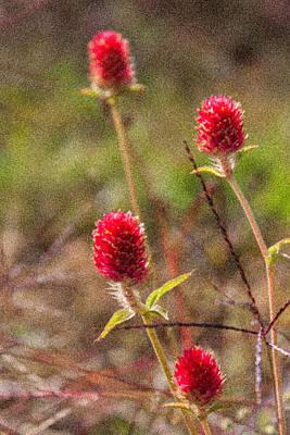 Red Spiky Flowers Art Print by Karen Stephenson