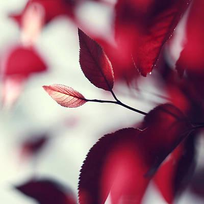 Red Spring Art Print by Beata  Czyzowska Young