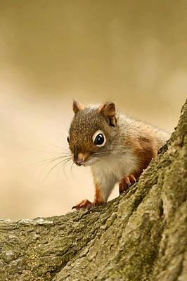Photograph - Red Squirrel by Ann Bridges