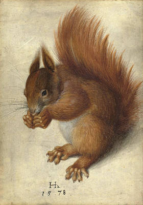 Printing Drawing - Red Squirrel  by Hans Hoffmann