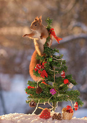 Christmas Squirrels Wall Art - Photograph - Red Squirrel On Top Of Miniature by Geert Weggen