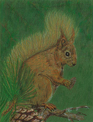 Animals Drawings - Red Squirrel by Stephanie Grant