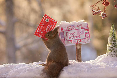 Christmas Squirrels Wall Art - Photograph - Red Squirrel Taking Out Christmas by Geert Weggen