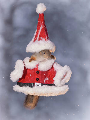 Christmas Squirrel Wall Art - Photograph - Red Squirrel Wearing Miniature Santa by Geert Weggen