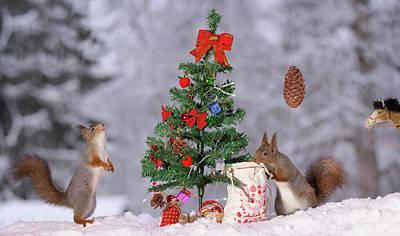 Christmas Squirrel Wall Art - Photograph - Red Squirrels Examining Miniature by Geert Weggen
