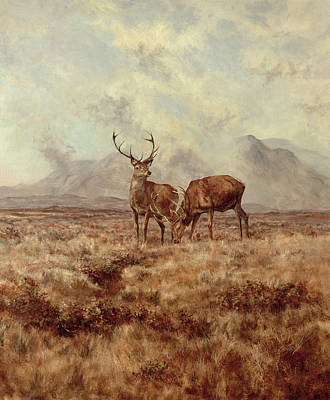 Wildlife Landscape Painting - Red Stags, Ben Buie by Tim Scott Bolton