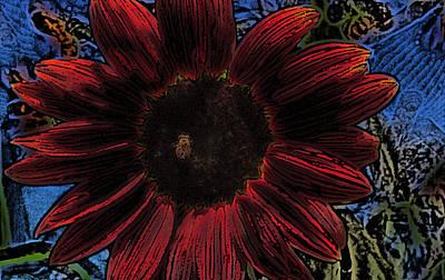 Sun Flower Photograph - Red Sun Honey Pencil Drawing by Scott Campbell