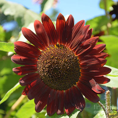 Photograph -  Flower - Red Sunflower - Luther Fine Art by Luther Fine Art