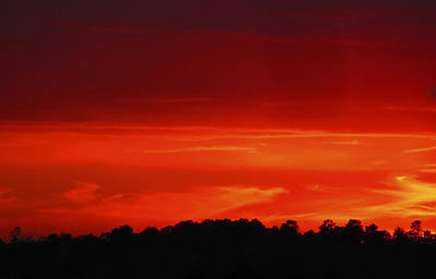 Art Print featuring the photograph Red Sunset by Debra Crank