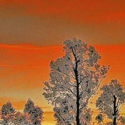Photograph - Red Sunset With Trees by Ben and Raisa Gertsberg
