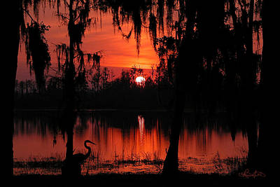 Photograph - Red Swamp by Renee Sullivan