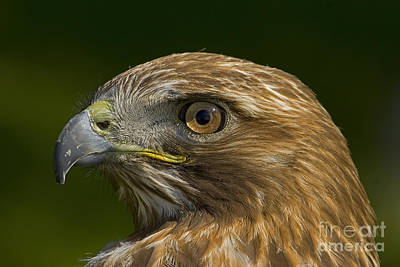 Abstract Male Faces - Red-Tail Hawk   #5663 by J L Woody Wooden