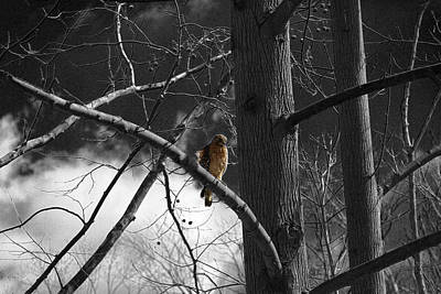 Photograph - Red Tail Hawk by David Yocum