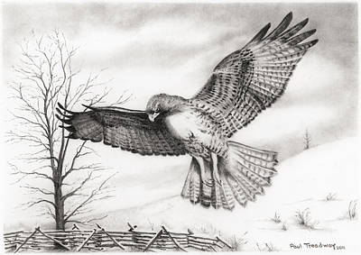 Red Tail Hawks Drawing - Red Tail Hawk by Paul Treadway