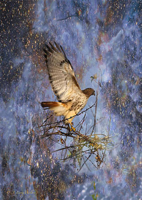 Print featuring the digital art Red-tailed Hawk Applauding The Early Morning Sunrise by J Larry Walker