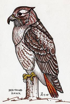 Red Tail Hawks Drawing - Red Tailed Hawk by Artreats By Tim