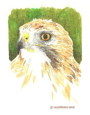 Wall Art - Drawing - Red Tailed Hawk by Paul Shafranski