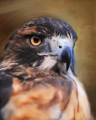 Night Hawk Wall Art - Photograph - Red Tailed Hawk Portrait by Jai Johnson