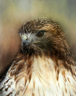 Photograph - Red Tailed Hawk Portrait by TnBackroadsPhotos