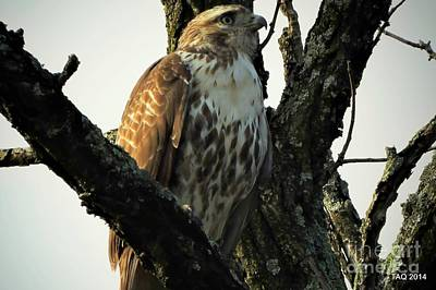 Photograph - Red Tailed Morning by Tami Quigley