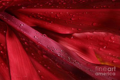Jewel Tone Photograph - Red Ti The Queen Of Tropical Foliage by Sharon Mau