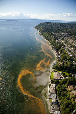 Photograph - Red Tide Blooms Along Puget Sound by Andrew Buchanan/SLP