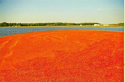 Pineland Farms Photograph - Red  Tide by Donald Cramer