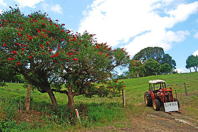 Photograph - Red Tractor For Sale by Ankya Klay