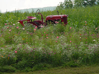 Photograph - Red Tractor in Flower Field by Nancy-Fay Hecker