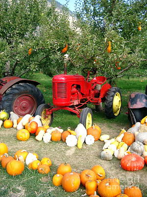 Art Print featuring the photograph Red Tractor Under The Gourds by Joyce Gebauer