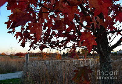 Red Tree By The Bridge Art Print by Amy Lucid