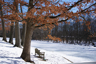 Photograph - Red Tree In Winter by Margie Avellino