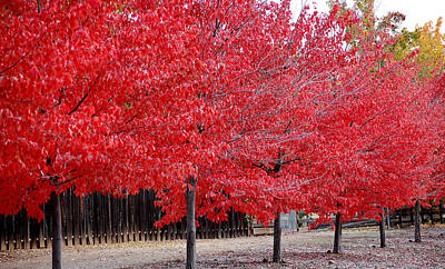 Photograph - Red Tree Line by Holly Blunkall
