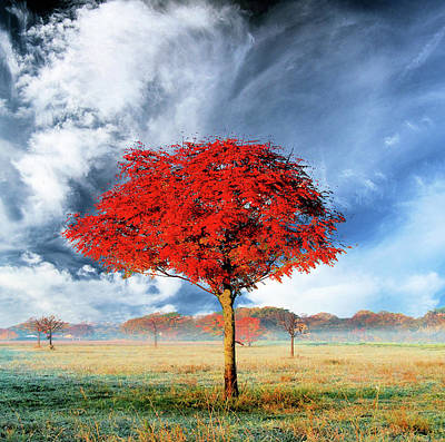 Photograph - Red Tree by Ulrich Mueller