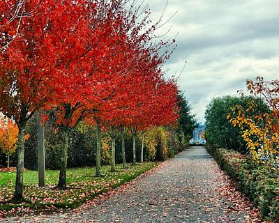 Photograph - Red Trees In Autumn by Patricia Strand