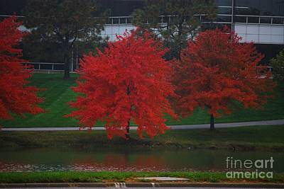 Photograph - Red Trees by Mark McReynolds