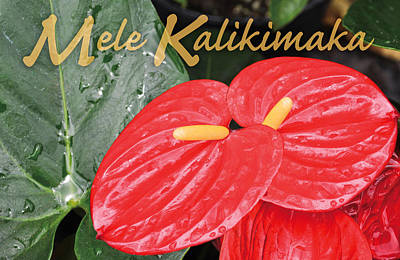 Photograph - Red Tropical Anthuriums by Denise Bird