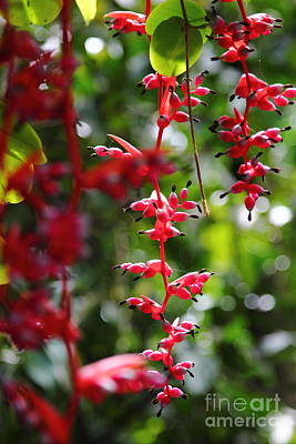 Photograph - Red Tropical Flowers by Theresa Ramos-DuVon