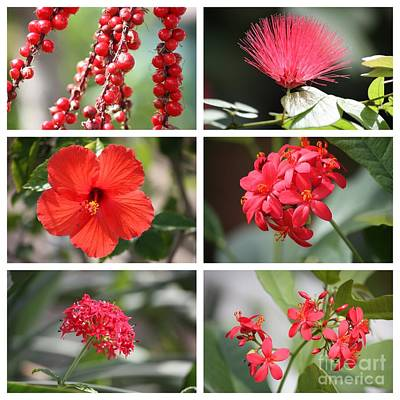 Photograph - Red Tropicals Collage by Carol Groenen