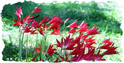 Photograph - Red Trumpets by Ellen Barron O'Reilly