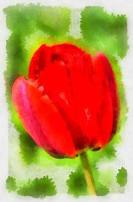 Digital Art - Red Tulip Aquarell by Matthias Hauser