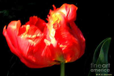 Painting - Red Tulip Blurred by M c Sturman