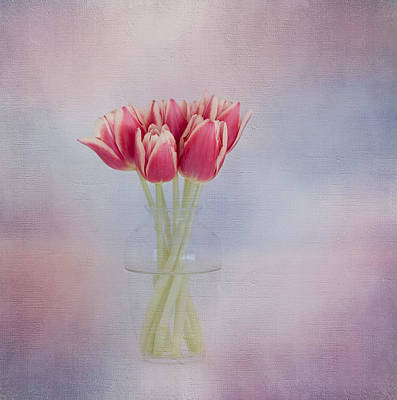 Photograph - Red Tulip Still Life by Kim Hojnacki