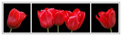 Red Tulip Triptych Art Print by Gill Billington