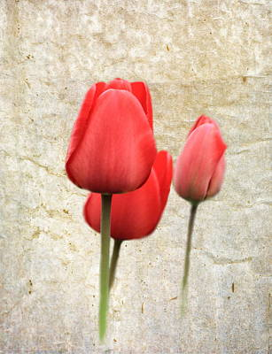 Red Tulips Art Print by Angie Vogel