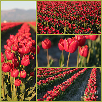 Watercolor Typographic Countries - Red Tulips Collage by Carol Groenen